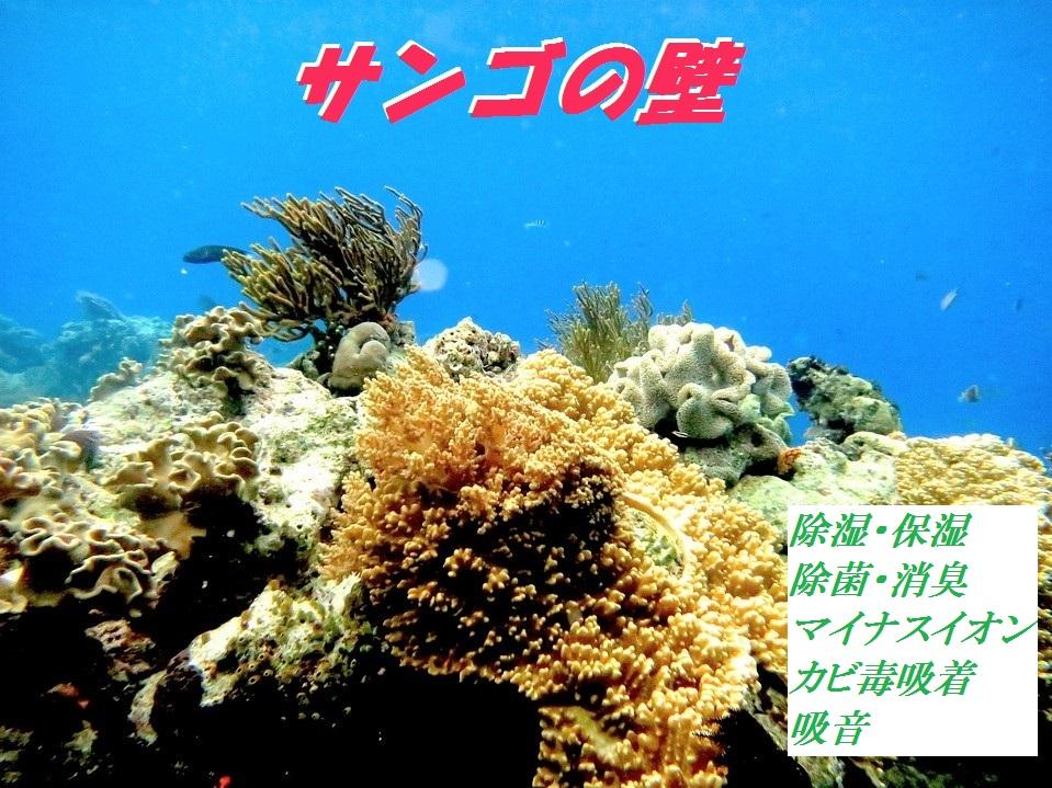 サンゴの壁